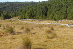 Piedras encimadas valley XLI Royalty Free Stock Photos