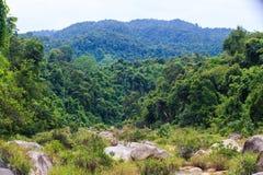 Piedras entre hierba contra bosque tropical Foto de archivo libre de regalías