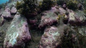 Piedras, habitantes y vegetación en parte inferior almacen de metraje de vídeo