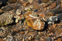 Piedras mojadas en la playa de la tabla fotos de archivo libres de regalías