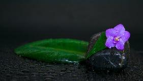 Piedras negras con gotas de la hoja, de la flor y del agua Fotografía de archivo libre de regalías