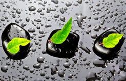 Piedras negras con las hojas verdes Fotos de archivo