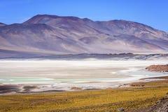 Piedras Rojas, Atacama, pimentão imagem de stock