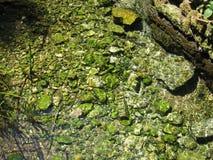 Piedras subacuáticas Fotos de archivo libres de regalías