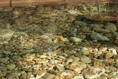 Piedras subacuáticas en el jardín Foto de archivo libre de regalías