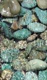 Piedras verdes Imagen de archivo libre de regalías