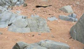 Piedras viejas serenas Fotografía de archivo