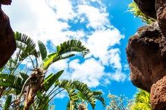 Piedras y árboles tropicales foto de archivo libre de regalías
