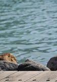 Piedras y agua Foto de archivo