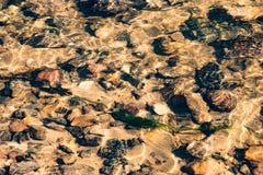 Piedras y algas mojadas debajo del agua en una cala Imágenes de archivo libres de regalías