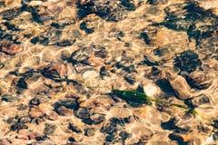 Piedras y algas mojadas debajo del agua en una cala Foto de archivo