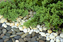Piedras y bonsais Imagenes de archivo