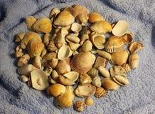 Piedras y cáscaras fotos de archivo