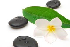 Piedras y flor del zen Imágenes de archivo libres de regalías