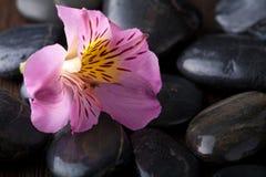 Piedras y flor negras del masaje Fotografía de archivo