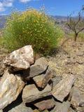 Piedras y flores Fotografía de archivo libre de regalías