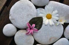 Piedras y flores blancas Foto de archivo libre de regalías