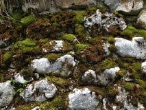 piedras y musgo Fotos de archivo libres de regalías
