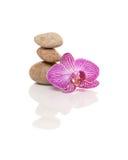 Piedras y orquídea Imágenes de archivo libres de regalías