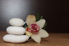 Piedras y orquídea con el fondo negro Fotografía de archivo