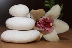 Piedras y orquídea con el fondo negro Fotografía de archivo libre de regalías