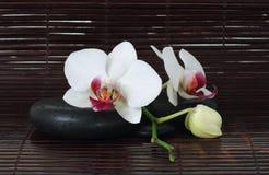 Piedras y orquídea del balneario Imagen de archivo libre de regalías
