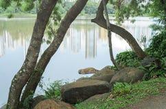 Piedras y ramas de árbol en la orilla del lago fotografía de archivo