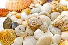 Piedras y seashells. Imágenes de archivo libres de regalías