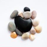 Piedras y seashells del balneario Fotografía de archivo libre de regalías