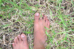 Pieds à sur l'herbe. Photos stock