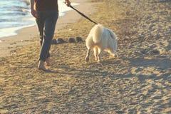Pieds brouillés du ` s d'homme et son chien blanc marchant loin par le bord de la mer Photographie stock libre de droits