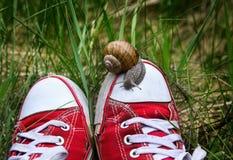 Pieds dans de vieux chaussures en caoutchouc rouges déchirés avec le grand escargot sur le dessus Images stock