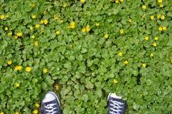 Pieds dans des espadrilles bleues dans le pré vert avec les fleurs jaunes Photos libres de droits