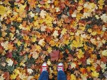 Pieds dans des espadrilles rouges sur le fond de l'automne Photographie stock