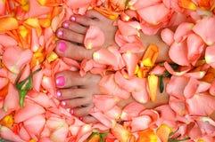 Pieds dans des lames de rose Images libres de droits