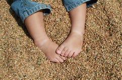 Pieds de bébé blanc s'asseyant sur le blé Image stock