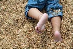 Pieds de bébé blanc s'asseyant sur le blé Image libre de droits