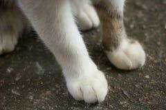 Pieds de chat Photographie stock