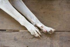 Pieds de chien Photographie stock libre de droits