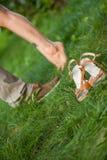 Pieds de types et filles sur l'herbe Image libre de droits