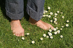 pieds et marguerites photos stock