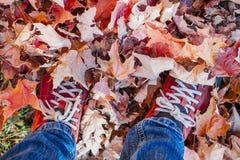 Pieds se tenant dans des feuilles tombées d'érable Photographie stock