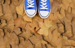 Pieds sur des feuilles d'automne Photographie stock