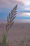 Piegato nel vento Fotografia Stock Libera da Diritti