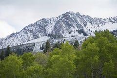 Piek met de afgedekte bergen van Utah Sneeuw met rollende groene heuvels Stock Foto