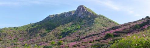 Piek van het Hwangmaesan-Park van het Land in Zuid-Korea Roze koninklijk royalty-vrije stock foto's