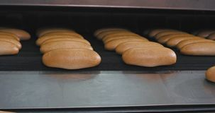 Piekarnia przemysłu piec świeży chleb wydostaje się od automatyzującego kreskowego konwejeru, stacza się od paska, nowożytny masz zdjęcie wideo