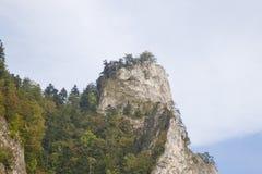 Pieken in Tatras, Slowakije Stock Foto