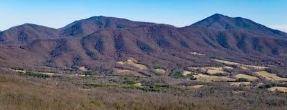 Pieken van Otter fron Blauw Ridge Parkway stock afbeelding