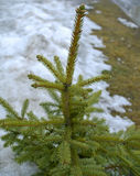 Piel-árbol joven Foto de archivo libre de regalías